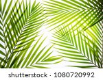 real palm leaves green tropical ... | Shutterstock . vector #1080720992
