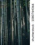 the bamboo groves in enkoji... | Shutterstock . vector #1080764366