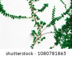 ivy on the white wall. | Shutterstock . vector #1080781865
