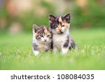 Two Adorable Kittens In The...