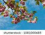beautiful spring garden     Shutterstock . vector #1081000685