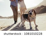 Stock photo dog walking on the beach with couple couple with pet dog on morning walk 1081010228