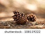 Two Pine Cones On The Ground.