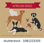 dogs by country of origin.... | Shutterstock .eps vector #1081225205