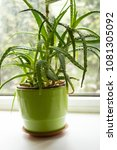 succulent  exotic plants on the ...   Shutterstock . vector #1081305092