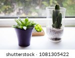 succulent  exotic plants on the ...   Shutterstock . vector #1081305422