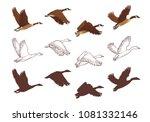 goose flying process in... | Shutterstock .eps vector #1081332146