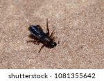 Macro View Of Digger Wasp...