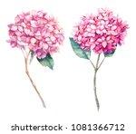watercolor pink hydrangea... | Shutterstock . vector #1081366712