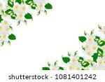 branch of jasmine flowers... | Shutterstock . vector #1081401242