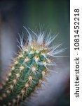 flower at garden botany bay ...   Shutterstock . vector #1081452218