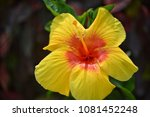 flower at garden botany bay ...   Shutterstock . vector #1081452248