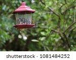 female northern cardinal... | Shutterstock . vector #1081484252