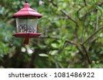 female northern cardinal... | Shutterstock . vector #1081486922