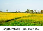 view of green rice fields from... | Shutterstock . vector #1081524152