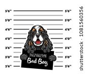 cocker spaniel bad boy. dog... | Shutterstock .eps vector #1081560356
