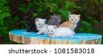 Five Kittens Outdoors
