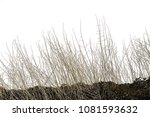 realistic grass silhouettes ... | Shutterstock . vector #1081593632