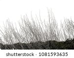 realistic grass silhouettes ... | Shutterstock . vector #1081593635