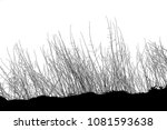 realistic grass silhouettes ... | Shutterstock . vector #1081593638