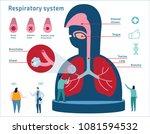 human respiratory system... | Shutterstock .eps vector #1081594532