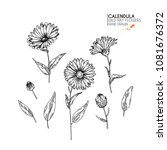 hand drawn wild hay flowers.... | Shutterstock .eps vector #1081676372