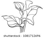 callas flowers with leaves.... | Shutterstock .eps vector #1081712696
