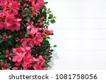 floral background for... | Shutterstock . vector #1081758056