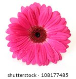 Stock photo pink flower 108177485