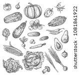vegetable and mushroom sketch... | Shutterstock .eps vector #1081861922
