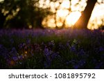 Small photo of Sunset at Bury Wood