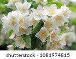 white orange flowers | Shutterstock . vector #1081974815