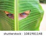boy banana leaf  man holds a...   Shutterstock . vector #1081981148