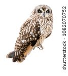 Stock photo short eared owl isolated 1082070752