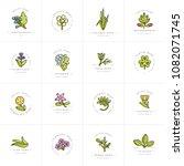 vector colorful set design... | Shutterstock .eps vector #1082071745