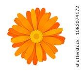 bright colourful orange gerbera ... | Shutterstock . vector #1082074172
