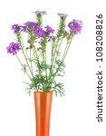 Verbena Flower In A Vase...