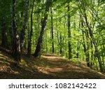 shadow pathway in the summer... | Shutterstock . vector #1082142422
