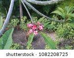 flower plumeria in the tropical ... | Shutterstock . vector #1082208725