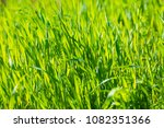 green lawn background | Shutterstock . vector #1082351366