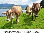 Swiss cows - stock photo