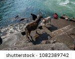 devprayag  india   april 30 ...   Shutterstock . vector #1082389742