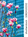 Small photo of Rotterdam, The Netherlands, April 18, 2018: Flowers of a magnolia tree with the facade of the Beurs WTC blurred inthe background