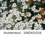 wild flowers meadow | Shutterstock . vector #1082431526