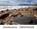 Charmouth  Dorset. Part Of The...