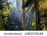 sunlight shining through tree... | Shutterstock . vector #1082478188