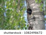 starling nesting in spring... | Shutterstock . vector #1082498672