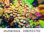 Small photo of Underwater world view