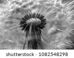 close up dandelion flower in... | Shutterstock . vector #1082548298