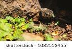 beautiful lizard closeup  macro ...   Shutterstock . vector #1082553455